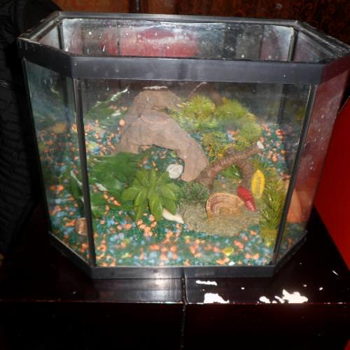 aquarium avec decoration et gravier
